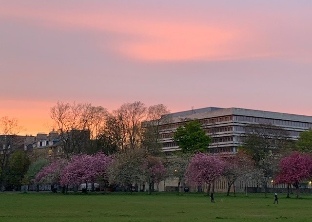 The Main Library viewed from The Meadows. Pink cherry blossom on trees surrounding the building and beautiful golden sky.